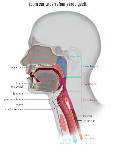 cancer ORL