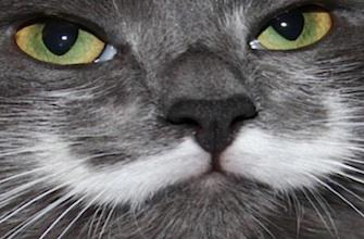Cas de rage chez un chat : un virus transmissible à l'homme