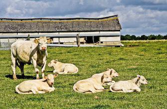 Viande issue d'animaux clonés : l'Europe se bat pour la traçabilité