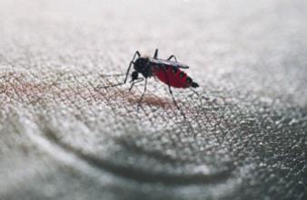 Moustique tigre : une menace pour la santé dans 18 départements