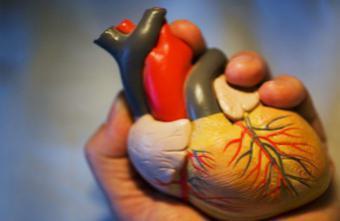 Infarctus : greffer des cellules de muscles pour réparer le coeur