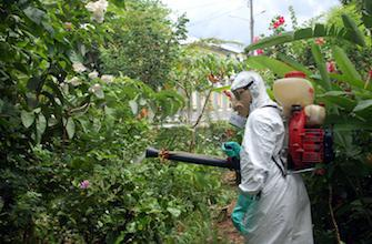 Chikungunya : la Martinique en situation épidémique
