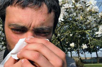 Pollens : la carte de France des allergies
