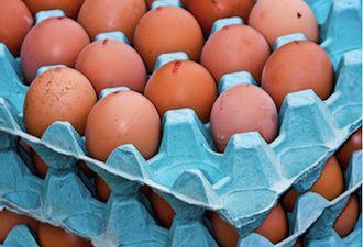 Salmonelles : des lots d'oeufs contaminés retirés de la vente