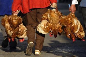 Virus H7N9 : la Chine augmente le niveau d\'alerte