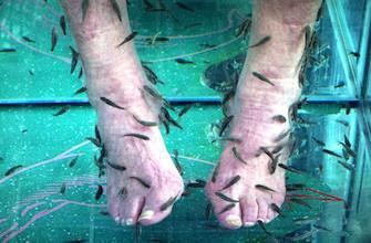 L\'Ansm épingle une publicité pour la fish pédicure