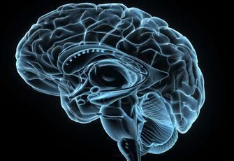 Cerveau : un hémisphère compense l'autre
