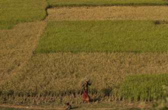 Les déficits cognitifs reculent chez les agriculteurs