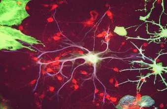 Comment le cerveau transforme les odeurs en souvenirs à long terme ?