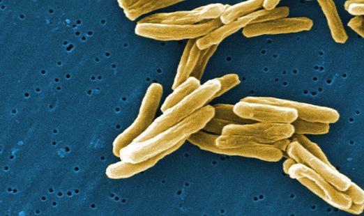 Une nouvel antibiotique efficace contre les bactéries multirésistantes