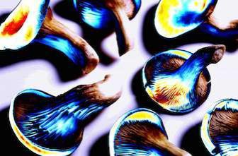 Une étude sur le LSD attire de nombreux étudiants