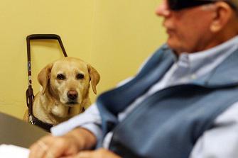 Une association d'aide aux aveugles dans le collimateur de la Cour des comptes