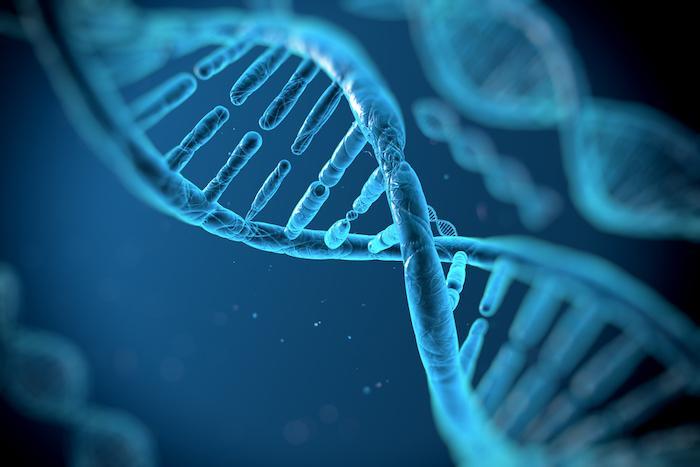 Des gènes communs au diabète et aux maladies cardiaques