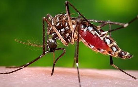 Zika : 50 villes menacées aux Etats-Unis