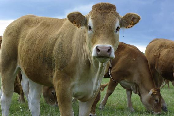 Mieux nourrir les animaux pour soigner notre alimentation