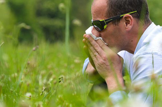 Comment notre flore intestinale fait barrage aux allergies