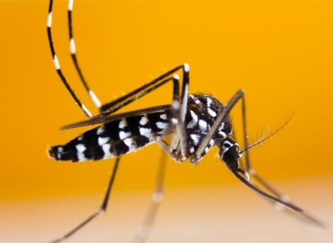 Pourquoi le cas de dengue recensé en région parisienne inquiète