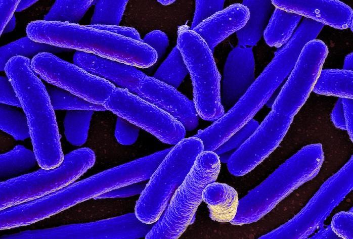 Immunothérapie : le microbiote influence la réponse au traitement