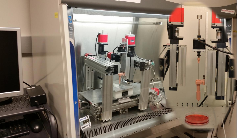 Impression en 3D : du cartilage pour réparer les articulations