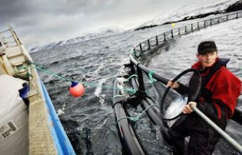 Le saumon  norvégien serait sans danger chez la femme enceinte