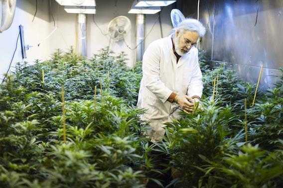 Cannabis : quatre mesures pour dissuader les mineurs
