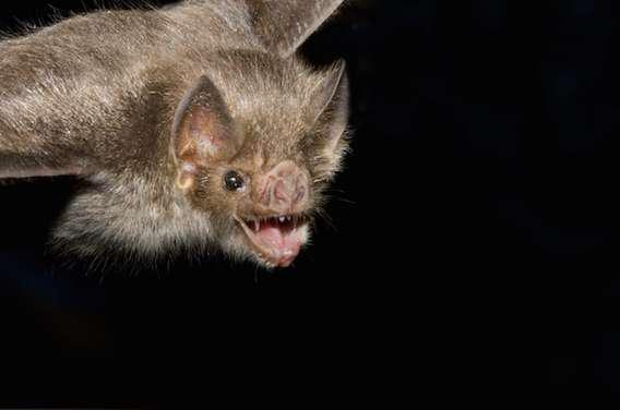 Rage : 12 enfants tués par des chauves-souris vampires au Pérou