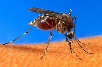 Alerte aux moustiques : quelles peaux les attirent