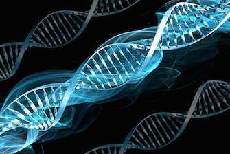 Une technique pour révéler les secrets de l'ADN endommagé