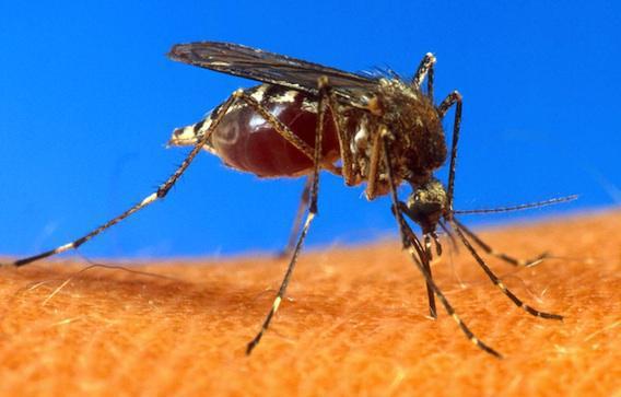 Paludisme : Microsoft teste un drone anti-moustique