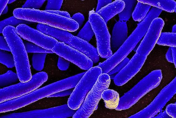 Antibiorésistance : découverte d'une 4ème superbactérie