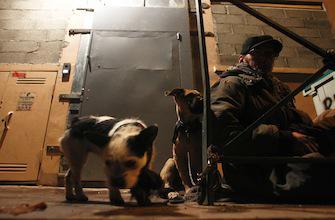 Sans-abri : 70% des demandes d'hébergement insatisfaites