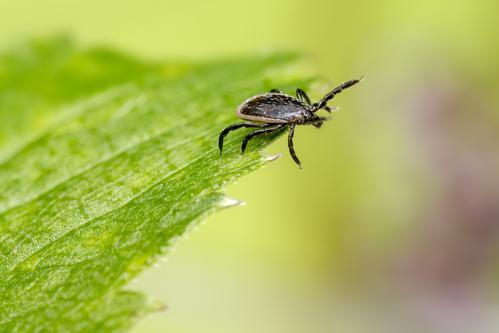 Maladie de Lyme : l'Assurance maladie condamne le Dr Marc Arer
