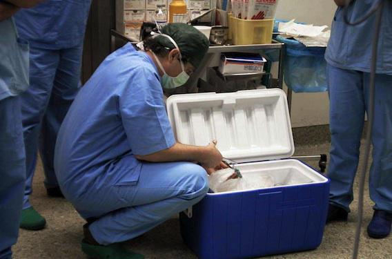 Transplantations : 15 organes greffés tous les jours