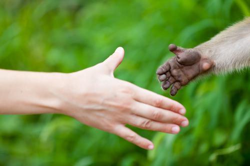 L'animal au secours de la santé humaine