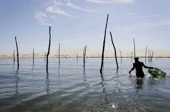 Huîtres d'Arcachon : levée de l'interdiction de consommation