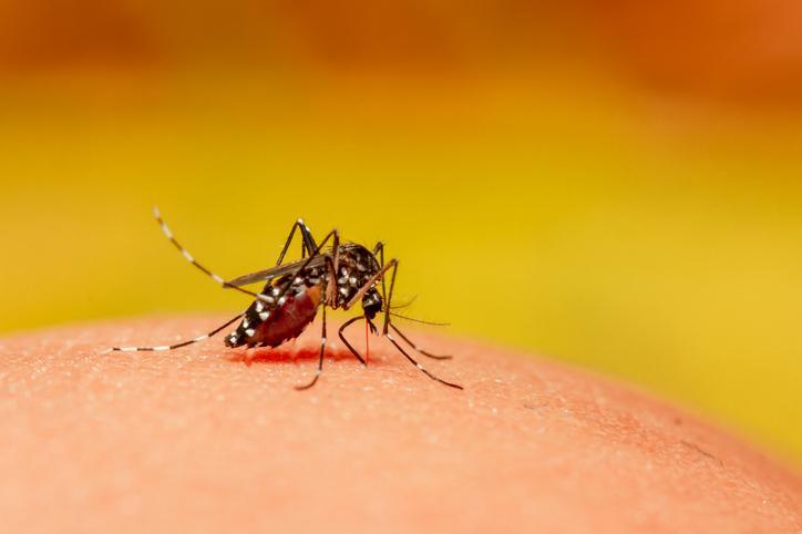 Un vaccin dérivé de la rougeole pourrait guérir le virus du chikungunya