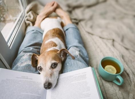 Confinement avec des animaux de compagnies : les conseils de vétérinaires