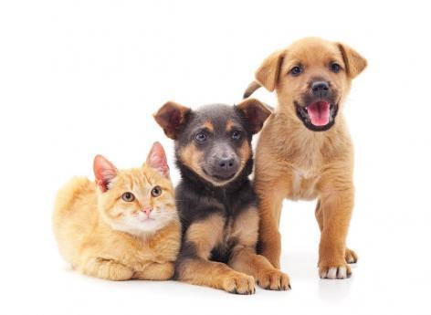 Syndrome de Noé : quel est cet étrange trouble lié aux animaux de compagnie ?