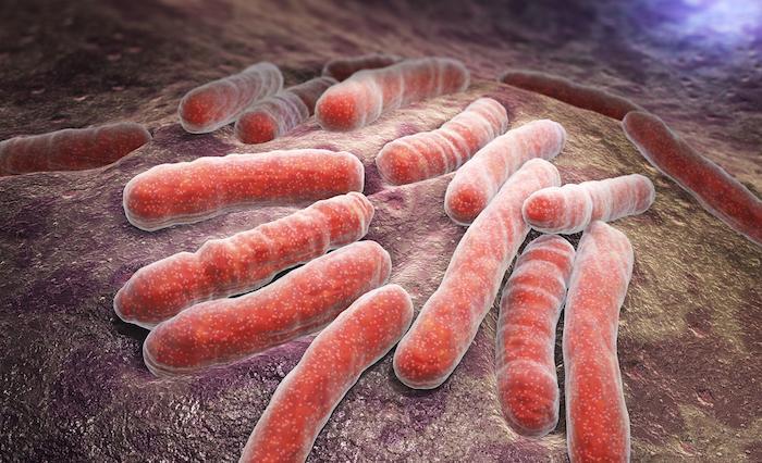 """Superbacterias: más de 30,000 muertes en Europa debido a políticas de salud """"a corto plazo"""""""