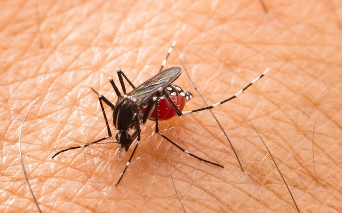 Zika, dengue : les ultrasons diffusés sur YouTube peuvent-ils faire fuir les moustiques ?
