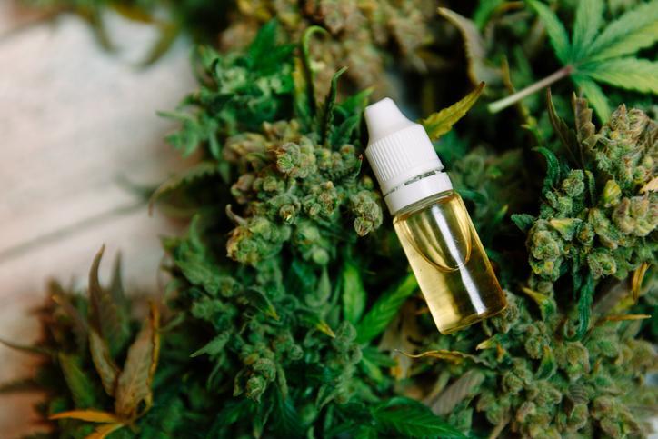 Cannabis de synthèse : 71 overdoses en deux jours sur le campus américain de Yale