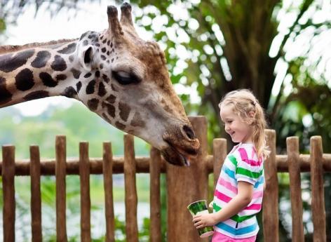 Les animaux des zoos peuvent transmettre aux visiteurs des bactéries résistantes aux médicaments