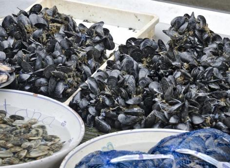 Rappel de moules Carrefour et Intermarché contenant des toxines paralysantes