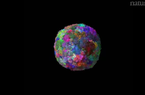Cancer : la modélisation 3D permet d'observer l'évolution des tumeurs