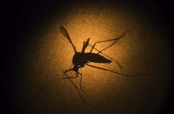 Virus Zika : 15 femmes enceintes infectées aux Antilles et en Guyane