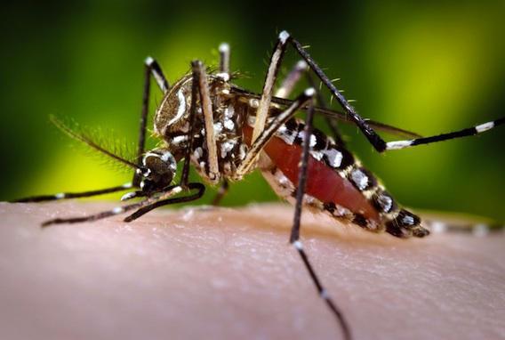 Zika : 2 premiers cas déclarés au Vietnam