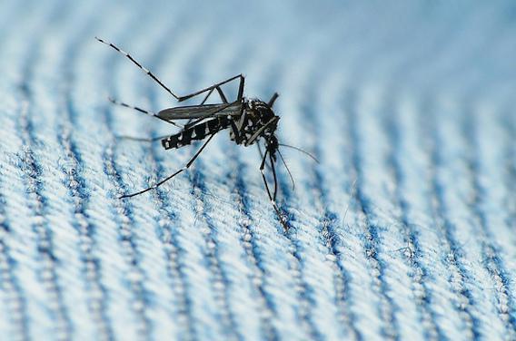 Zika : la transmission sexuelle avérée par des chercheurs français