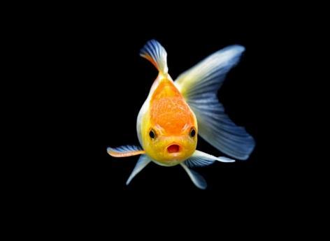 Comment nos mains sont nées de nageoires de poisson