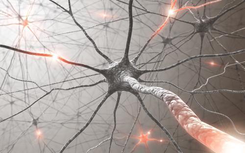 Greffe de neurones : la rapidité d'intervention est cruciale