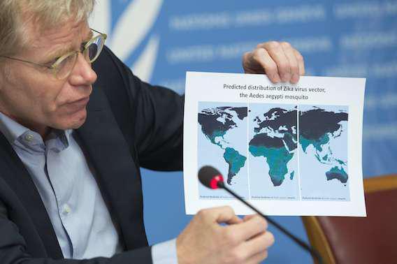Zika : le lien direct avec la microcéphalie n'est pas encore établi